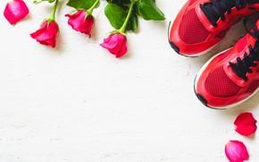 Картинка розы, Цветы, Кросовки