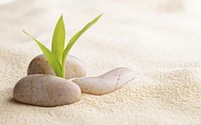 Картинка песок, росток, спа камни