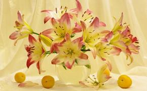 Обои цветы, красота, лилии, растения, врукты, букеты, абрикосы, флора, букетик, натюрморт, настроение, лето, июль