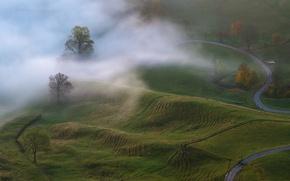Картинка осень, деревья, природа, туман, утро, луга