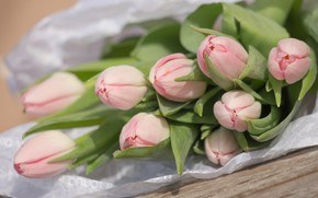 Картинка цветы, букет, Тюльпаны, розовые, бутоны