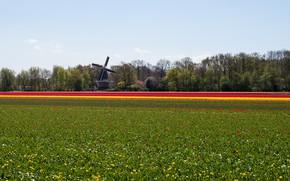 Обои природа, поле, Пейзаж, мельница, цветы