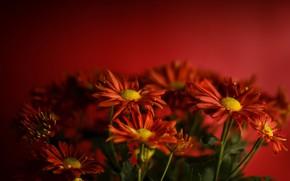 Картинка цветы, фон, цвет
