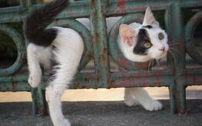 Обои котенок, забор, малыш
