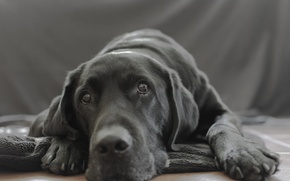 Картинка взгляд, дом, собака