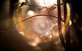 Обои природа, паутина, свет