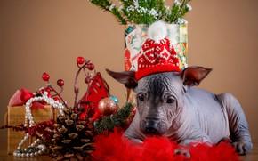 Картинка праздник, новый год, щенок, шишки, шапочка, декор