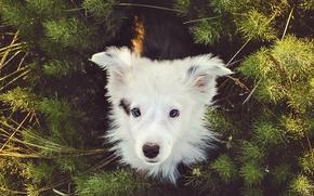 Картинка взгляд, друг, собака, щенок, Бордер-колли