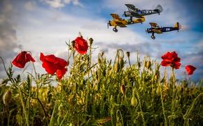 Картинка поле, лето, небо, облака, полет, авиация, цветы, мак, маки, самолеты, три, трио, маковое поле, маковое