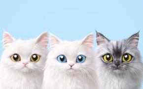 Картинка трио, коты, фон