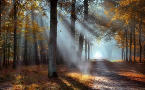 Картинка рассвет, лучи солнца, осенний парк, дорога в даль