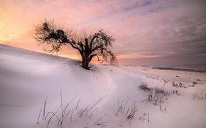 Картинка зима, снег, закат, природа, дерево