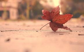 Картинка природа, фон, лист