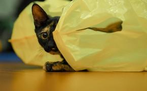 Картинка глаза, кот, мешочек