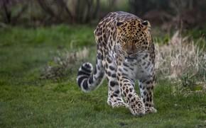 Картинка пятна, леопард, хвост