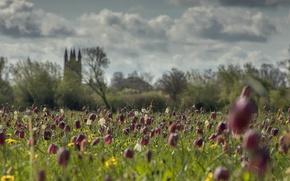 Картинка поле, лето, цветы