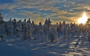 Картинка зима, снег, деревья, закат, Норвегия