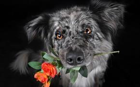 Обои цветок, взгляд, собака
