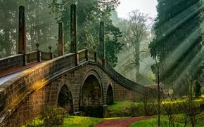 Картинка зелень, трава, солнце, деревья, мост, парк, Шотландия, тропинка, кусты, лучи света, Ayrshire, Dumfries House