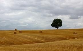 Картинка tree, countryside, hay, bales, farmland