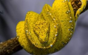 Картинка природа, змея, питон