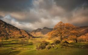 Обои деревья, горы, осень, Англия, Камбрия