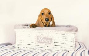 Картинка уют, дом, собака