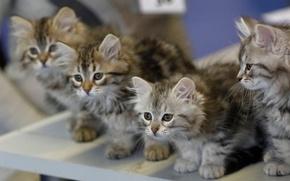 Картинка размытость, котята, малыши, квартет
