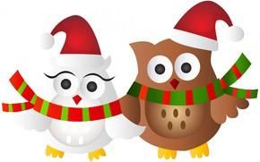 Картинка фон, новый год, птички