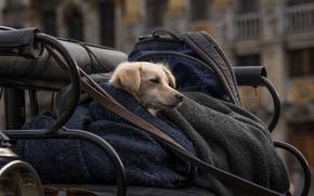 Обои преданность, верность, город, друг, жизнь, холод, забота, собака