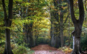 Обои лес, деревья, дорога