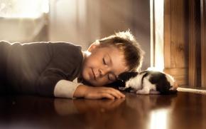 Картинка сон, мальчик, котёнок