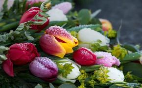 Картинка иней, капли, цветы, лёд, букет, тюльпаны, бутоны, разноцветные, боке