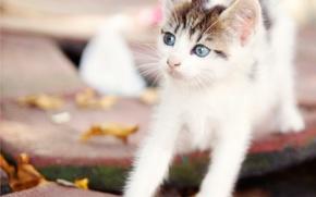 Картинка лапки, малыш, котёнок