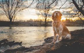 Обои река, свет, собака