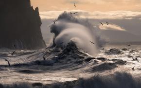 Обои море, волны, птицы, скалы