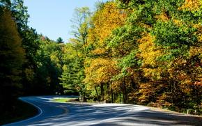 Картинка дорога, осень, лес, солнце, деревья, США, Vogel State Park