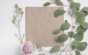 Картинка Зелень, Цветы, Роза, Бумага, Бутон