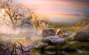 Обои пейзаж, птица, Thai Phung, водоём, деревья, природа, утро, камни, пеликан