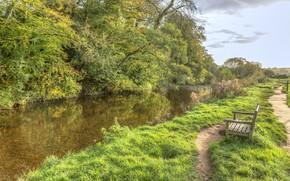 Картинка река, зелень, Деревья