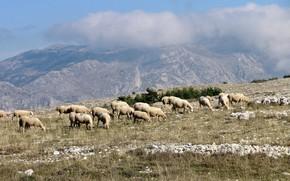 Обои Прованс, овцы, горы, облака, Франция