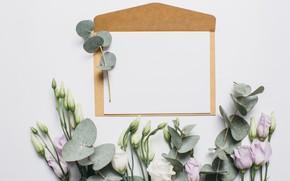 Картинка письмо, цветы, конверт, эустома