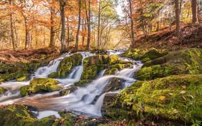 Картинка Германия, деревья, мох, Harzgerode, листья, Selkefall, лес, ручей, солнце, осень, камни