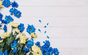 Картинка цветы, желтые, синие, хризантемы