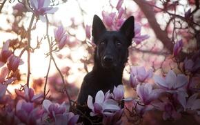 Обои природа, друг, собака