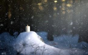 Обои свеча, снег, лес