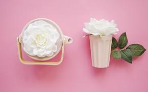 Картинка цветы, фон, белые розы, Чайник