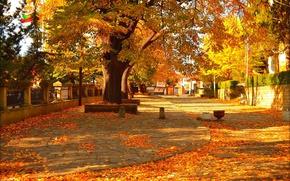 Картинка Осень, Деревья, Улица, Fall, Листва, Autumn, Street, Colors, Trees, Leaves