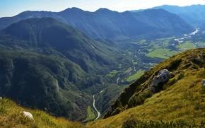 Картинка деревья, горы, река, поля, высота, долина, солнечно, вид сверху, Словения, Bovec