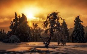 Обои зима, ночь, природа